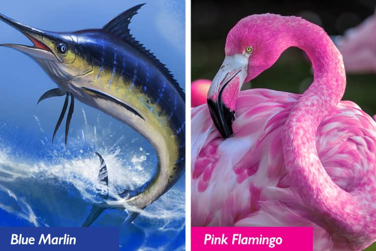 A collage of a blue marlin and pink flamingo.
