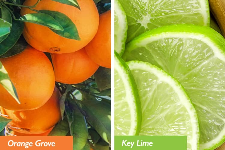 Orange groves and keylimes.